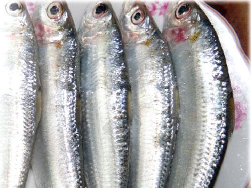 Image result for cá trích