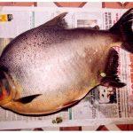 Hướng dẫn cách làm món cá chim rim mặn