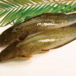 Bồi bổ sức khỏe với món Cá trê nướng mắm gừng