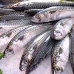 Hướng dẫn cách chọn cá đúng mùa