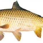 Cách để có món cá tươi ngon hấp dẫn