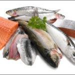 Hướng dẫn bảo quản cá biển tươi ngon và đơn giản nhất