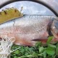 Nguyên liệu làm món cá mè kho nghệ
