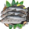 cá chẽm tươi