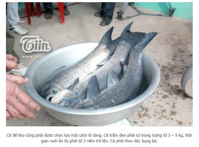 Cá trắm đen nuôi ốc hơn 3 năm và trọng lượng phải đạt từ 3 đến 7kg
