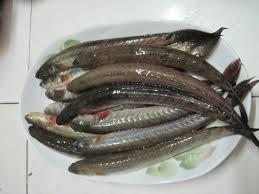 Cá kèo phổ biến ở Tây Nam Bộ nước ta