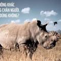 Tê giác đang bị hủy diệt vì con người