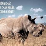 Sừng tê giác tại Việt Nam bị buôn bán hết sức nghiêm trọng